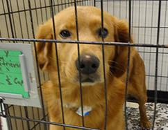 pet-adopt-242x188-thumb