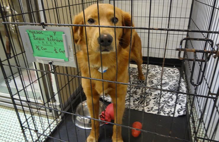 pet-adoption-740x480